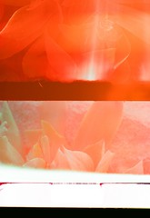 Zeiss Ikon Tropen Adoro Color Test Roll 1 (btsalyuk) Tags: zeiss ikon tropen adoro 120 color test roll fuji provia 400 light leaks