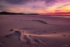 Dead Seal in the Sand, on the Beach - South Africa 2018 (Eric R Porcher) Tags: 2018 afrique afriquedusud animal berge bord extérieur falaise flickrallpublic goldenhour littoral mammifère naturel noordhoek otarie paysage plage péninsuleducap rive westerncape