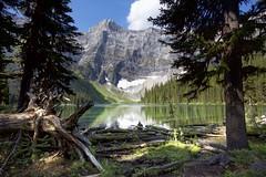Rawson Awesome Lake stump (John Andersen (JPAndersen images)) Tags: alberta clouds forest kananaskis logs mountains rawsonlake sky stump trees