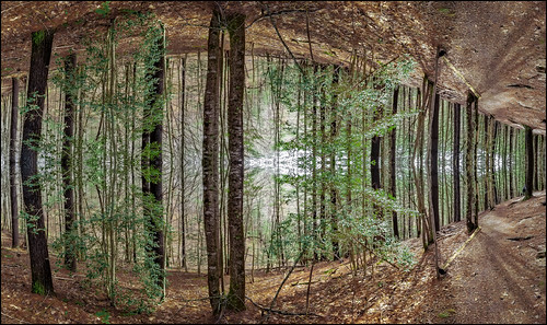 WNC Arboretum (Asheville, North Carolina)