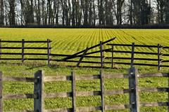 Broken (braddalad123) Tags: outdoor field fence broken crops trees sun sunshine sunlight rows lines contrast colour shadow nikon d3200 layers