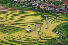 _J5K0767.0617.Khao Mang.Mù Cang Chải.Yên Bái (hoanglongphoto) Tags: asia asian vietnam northvietnam northwestvietnam northernvietnam landscape scenery vietnamlandscape vietnamscenery terraces terracedfields terracedfieldsinvietnam sceneryterracedfieldsinvietnam house homes canon tâybắc yênbái mùcangchải terracedfieldsinmucangchai phongcảnh ruộngbậcthang ruộngbậcthangmùcangchải canoneos1dsmarkiii canonef70200mmf28lisiiusm village bảnlàng nhữngngôinhà khaomang hdr seasonharveast mùagặt mùcangchảimùagặt mùcangchảimùalúachín