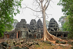 Ta Prohm, Angkor. (trev.eales) Tags: taprohm taprohmtemple angkor angkortemples ancient historicalsite buddhist buddhisttemple siemreap cambodia stranglerfigtree tombraider archeologicalsite southeastasia