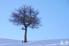 Lanslebourg-Mont-Cenis (damzed) Tags: pentaxk5 pentaxda18135 auvergnerhônealpes savoie valcenis lanslebourgmontcenis montagne règnevégétal bleu
