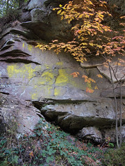 Bohemia (17/36) (Freddy Berlin) Tags: germany sachsen saxony bohemia sächsischeschweiz elbe landscape river nature hiking wanderer elbsandsteingebirge geology autumn forest woods reserve canyon exploring travel backpacking walking slow ecosystem protected olympus pen m43 mft microfourthirds lumix 20mm 17 stone limestone rocks leaves foliage orange yellow red colors nationalpark diary life visual