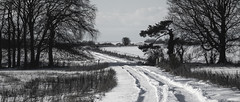 snowy track (Redheadwondering) Tags: sonyα7ii snow salisburyplain wiltshire winter landscape tracks byway road trees minolta minolta100200mm