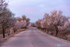 The beginning of the spring (Jose F. Lorenzo Gil) Tags: 52weeks2019 52 weeks 2019