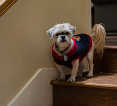 Fred (Angelia's Photography) Tags: project52 dogs nikon 50mm