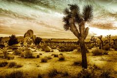 DSC_4002 copie (C&C52) Tags: paysage landscape nature désert arbres rochers artnumérique collector