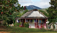 (sbrrmk) Tags: cuba kuba viñales vinales himmelblau tree baum cycling pano nature landscape landschaft road path clouds wolken strand caribbeans grass forest wood valley national park pinar del río hütte cabin haus hause dog hund pig schwein
