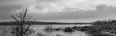 Stark Wasteland (LeeDylanLeeDyl) Tags: nikon nikkor 50mm pano panorama burren county clare claire stark abandoned black white bw bnw lake water tree flood flooding grass
