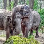 Elephants love, Burgers Zoo, Netherlands - 2377 thumbnail