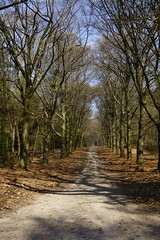 4e Midden Veluwe wandeltocht Ucghelen 30-03-2019 (marcelwijers) Tags: 4e midden veluwe wandeltocht ucghelen 30032019 walk marche wandeling wandern gelderland nederland niederlande netherlands pays bas walking hiking