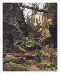 Abseits der großen Wanderwege... (Norbert Kaiser) Tags: sachsen saxony elbsandsteingebirge elbesandstonemountains groserzschand hinteresächsischeschweiz spitzsteinschlüchte wanderweg weg pfad wandern natur nature landschaft landscape