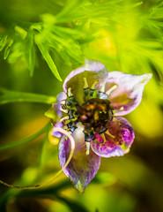 Morning gorgeous. 😊  #finder #mextures #fingerprintofGod #macro_drama #graphic #nature #botanical #leaves #macro_vision #art #greenliving #tones #filthyflora #plantsinfocus #fiftyshades_of_nature #landscape #urbanjungle #naturelover #flowers #flower (jophipps1) Tags: filthyflora beauty macrobrilliance mextures flowersofinstagram plantlife botanical leaves tones fiftyshadesofnature graphic macro art flowers macrodrama nature greenliving macrovision finder flower bokehbliss flickrflowers fingerprintofgod flickr plantsinfocus naturelover urbanjungle landscape macrodreams