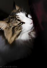 No Spirit' n' Shadow:Bright Light Flight Yamato. Click. (miyukiz4 ɥsıןƃuǝ ɹood) Tags: кошка mačka кот en katt köttur კატა un gat katze macska chat katė pisică котенок pisoi kačiukas kotek chaton cica kätzchen mačiatko kettlingur cat kitty