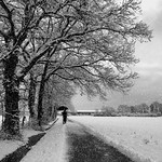 Alone in front of the white landscape thumbnail