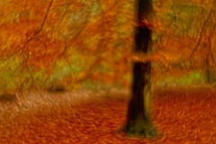 an impressionistic photo of a tree in autumn (Roland B43) Tags: ryckeveldewood impressionism autumn fall helios442 petzval