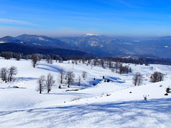 hegyek, fák / mountains, trees (debreczeniemoke) Tags: tél winter hó snow túra hiking erdő forest fa tree hegy mountain gutin gutinhegység gutinmountains olympusem5