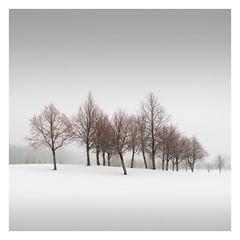 Squad (of Trees) (Vesa Pihanurmi) Tags: trees woods snow winter mist minimalistic minimalism colours nature espoo finland