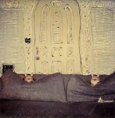 Guard Cats (tobysx70) Tags: polaroid sx70 sonar emulsion manipulation time zero tz instant film guard cats beachwood canyon hollywood hills los angeles la california ca billie ella sisters tabby cat pet portrait couch sofa cushions door gateway flash toby hancock photography