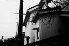雫 (frenchvalve) Tags: 雨 雫 楓 枝 rain raindrops film filmphotography analog 35mm monochrome bnw rangefinder fixedlens