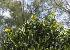 Roche Qui Pleure viewpoint, Mauritius / Смотровая площадка Ля-Рош-ки-Плер (Плачущая Скала) (dmilokt) Tags: природа nature пейзаж landscape песок sand цвет color colour пляж beach море океан sea ocean dmilokt green зеленый