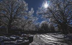 It's a frozen world (Kool Cats Photography over 11 Million Views) Tags: frozen winter icy ice reflections cold icestorm oklahoma outdoor shadows trees photography scenic scene scenery