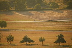 _MG_3339a - 28.08.2019 (hippo1107) Tags: konz oberemmel konzertälchen sonnenuntergang sunset sommer august 2018 abendrot abendstunde radfahren wandern ausruhen entspannen aussicht weinberge wiesen felder grün landschaft landschaftsfotografie marienkapelle kapelle chapbel canoneos70d canon eos 70d bank bench wanderweg ruhe stille