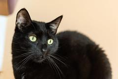 oliver (jojoannabanana) Tags: 3652018 blackcat cat eyes