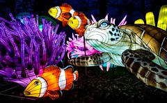 Longest Festival Of Light (Tim Bullock Photography) Tags: longleat festival light night long exposure