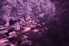 Blood river Infra red (colinhansen1967) Tags: river rivers trees forest stones rocks boulders arthurspass newzealand infrared ir720 filter blood beechforest peaceful water milky flow