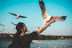 Asian woman feeding seagulls (Patrick Foto ;)) Tags: animal asian background bang beach beautiful beauty bird blue crackling cruise eat feather feed feeding female fly flying food freedom fun girl gull hand happiness happy lifestyle nature ocean outdoor people portrait pu scene sea seagull seagulls sky summer sunset thailand travel vacation water white wild wildlife wing woman young samutprakan th