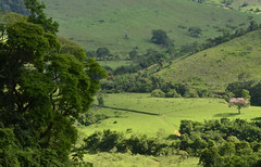 Poderia ser Shangri-la (Márcia Valle) Tags: roça verde green juizdefora minasgerais brazil brasil zonarural rurallandscape paisagemrural márciavalle nikon d5100 verão summertime tropicallandscape