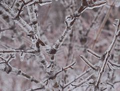 Encased in ice (kirsten.eide) Tags: d3300 nikon branches trees ice macro