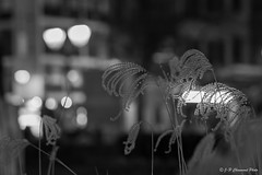 Liège by night - poésie