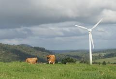 Ravenshoe_20190216_0033 (O En) Tags: wind turbines ravenshoe cows