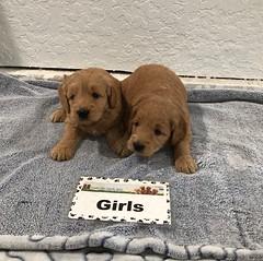 Annie Girls 3-9
