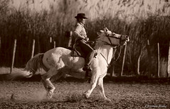 _DSC0697 (chris30300) Tags: camargue cheval