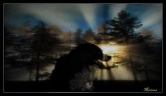 Shiny (patrick.verstappen) Tags: max bsd verstappen d7100 dog animal belgium perro photo picassa pinterest pat ipernity ipiccy image imagine gingelom google flickr facebook april pet back white komisch einfarbig hund drôle gens chien gracioso calle gente 滑稽 單色 街 人 狗 廣告 面白い モノクロ 通り 犬 広告 rolig gata веселая монохромный улица люди собака via populus canis tabula strada ニコン people xxx texture textured trees yahoo walking nikon textura texturizado sun forrest color animale bélgica lovely