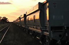 Sunset Tracks (Dulacca.trains) Tags: sunset ballast hoppers rollingstock stabled parked qr queenslandrailways queensland australia australian aussie oz train trains railroad railway dulacca