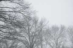 Cold Snowy Dreary Winter (Modkuse) Tags: cold snow snowy snowing winter nature natural art artphotography fineartphotography fineart photoart fujifilm fujifilmxt2 xt2 xf1024mmf4rois fujinon fujinonxf1024mmf4rois fujifilmxt2proviasimulation
