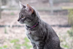 20190401 Newark Mia and Milo-27.jpg (ashleyrm) Tags: kittens pets milo canonrebelt4i animals canon canonrebel cats mia