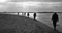On the beach (theo_vermeulen) Tags: cadzand zwin strand beach bw people coas sea zeeland zeeuwsvlaanderen