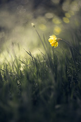 - (Julien Meyrat) Tags: flowers fleur macro art plant nature