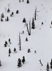 Avalanche survivors. Banff National Park. (erik.karole) Tags: banffcanada improvementdistrictno09 alberta canada ca
