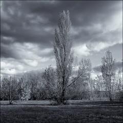 Paysage (jecrye8) Tags: nikond5500 nikon nikkor nb noiretblanc nature blackandwhite blanc black france monochrome tree arbre art flickr