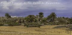 Maspalomas (Fotomanufaktur.lb) Tags: riupalace maspalomas grancanaria kanaries canary island dunas dünen palmen palmtrees spain