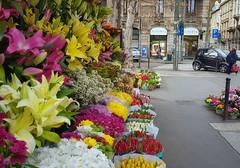 Omaggio floreale (Aellevì) Tags: cannavòrobertofioristamilano chiosco fiori colori strada città