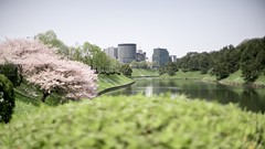 cherry blossoms in an imperial palace at Tokyo (S. Ken) Tags: フォクトレンダー voigtlander a7riii a7r3 7rm3 sony e general nokton classic 35mm f14 emount ソニー alpha α 索尼 tokyo japan cherry blossoms implerial palace 皇居 桜